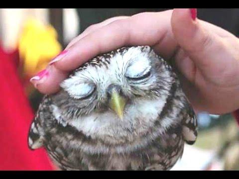 Cute Animals Cuddling – A Cute Animal Videos Compilation 2015